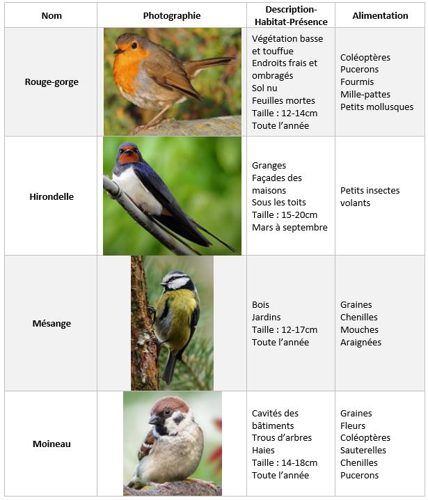 Différents oiseaux et leurs caractéristiques