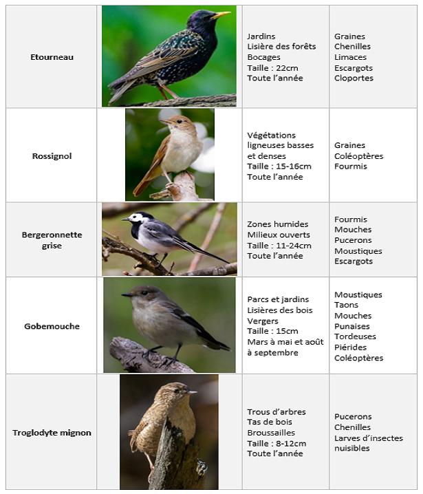 Oiseaux et différentes caractéristiques