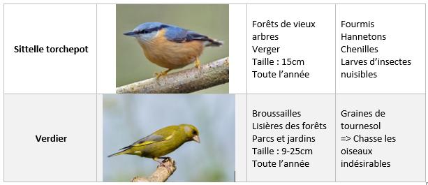 Oiseaux et leurs caractéristiques