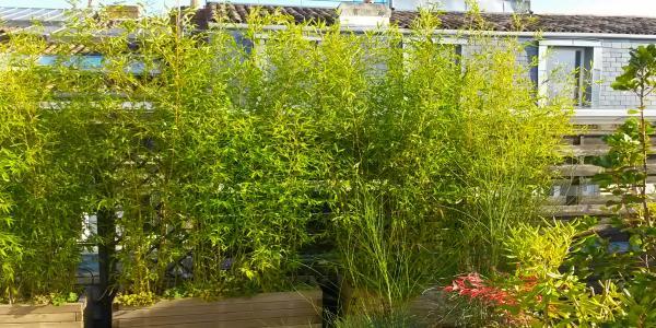 bambou balcon