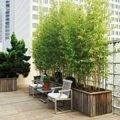 bambou balcon au soleil