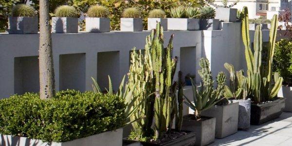 balcon désertique