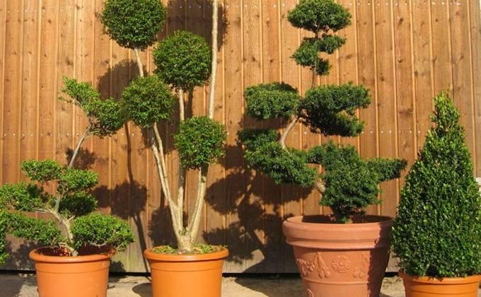 Autres Plantes Prestige