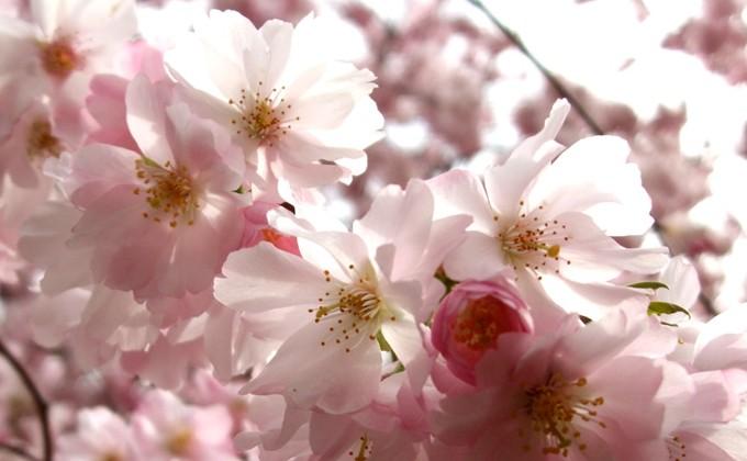 Quelles plantes pour jardin zen interesting tout savoir sur le beau jardin zen un jardin de - Quelles plantes pour jardin zen ...