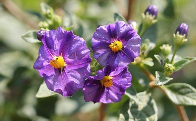 Floraison d'Automne et Hiver