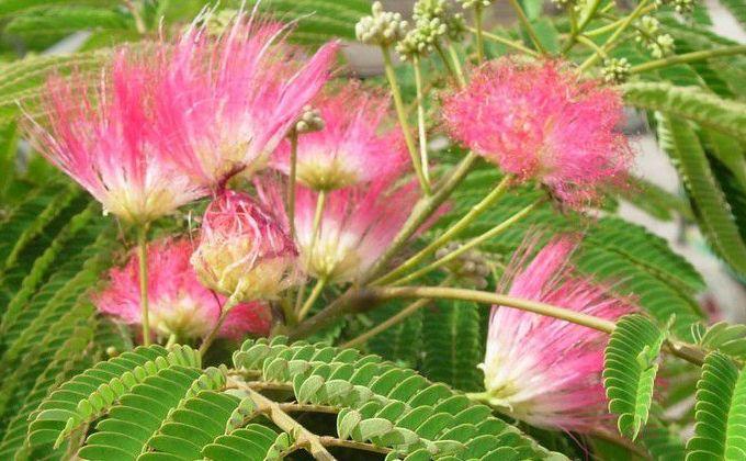 Floraison d'Eté