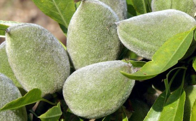 Arbres Fruitiers Fruit Me ®
