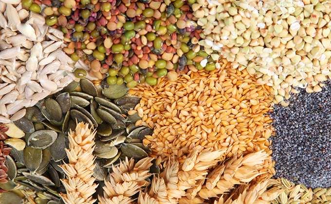 Semences & Graines de Légumes