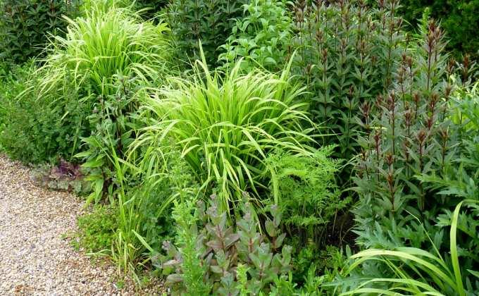 Couvre sols et talus vente plantes couvre sol et plantes pour talus prix pas cher leaderplant - Couvre sol jardin japonais ...