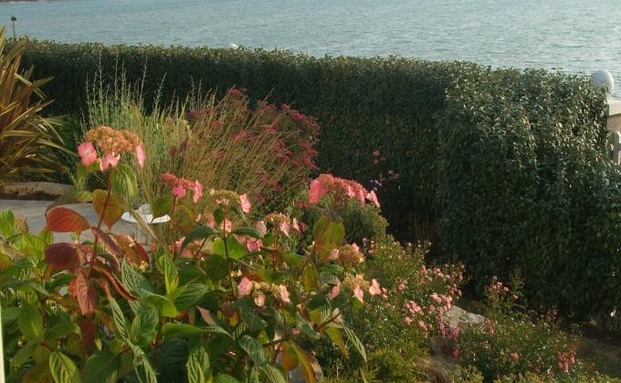 Emejing haie de jardin bord de mer photos for Plantes et arbustes de jardin