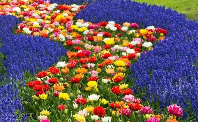 PLANTES À MASSIFS & PLANTES FLEURIES