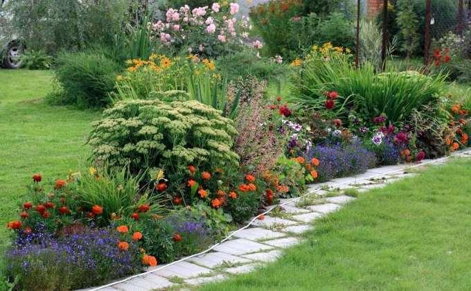 PLANTES VIVACES FLEURIES