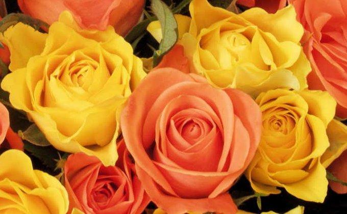 Roses jaunes et oranges