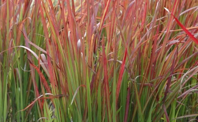 Toutes les Plantes Graminées