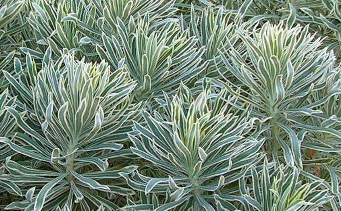 Toutes les plantes vivaces vente plantes vivaces prix for Plantes ombre exterieur nord