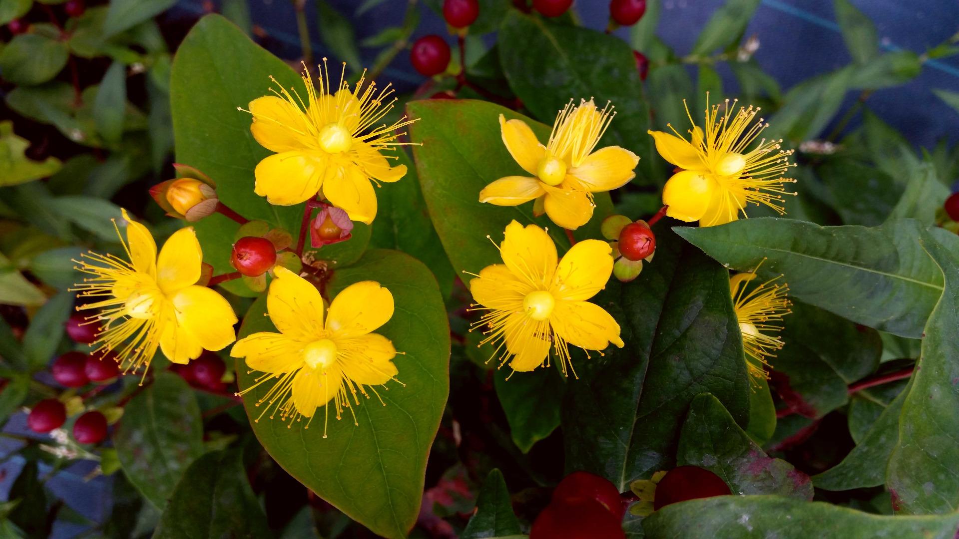 plantes pour fixer le sol au soleil - leaderplant