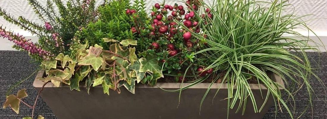carex-jardiniere-leaderplant