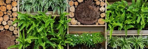 caisses en bois avec plantes