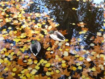feuilles bassin