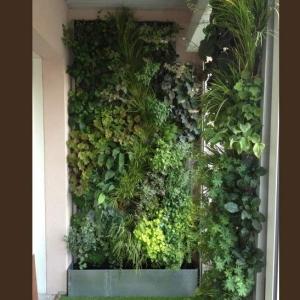 balcon ombre paris mur végétale