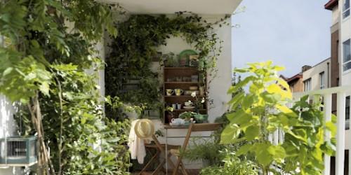 plante grimpante ombre paris