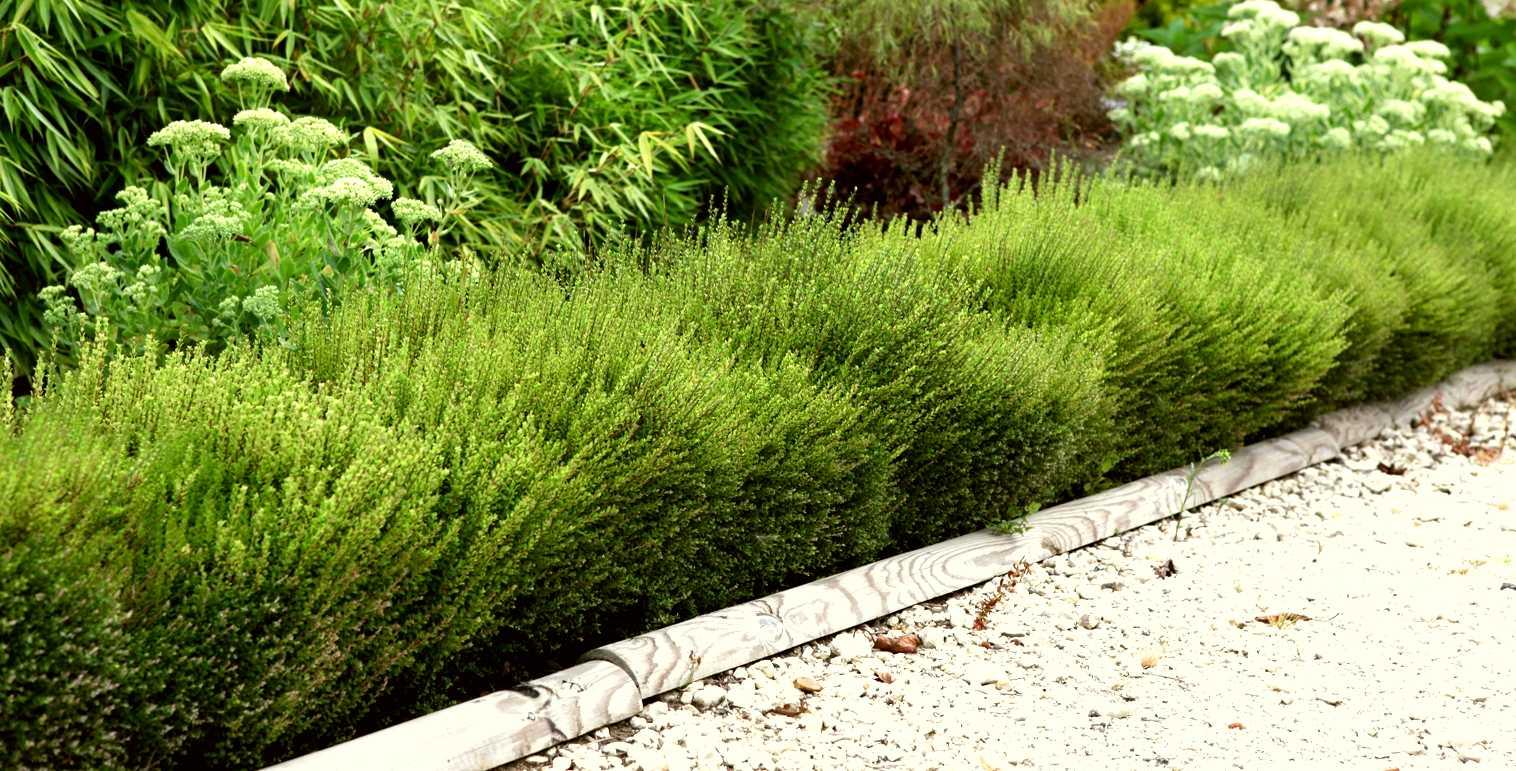 plantes pour fixer le sol à l'ombre - leaderplant