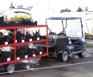 collecte des jeunes plants
