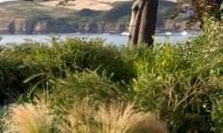 arbustes bord de mer