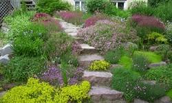 arbustes couvre-sols