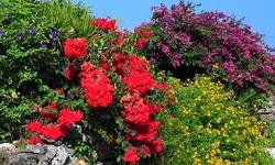 Arbustes à floraison décorative
