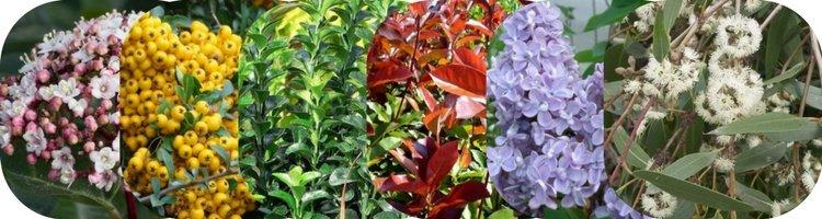 Arbustes pour Haie pour tous types de terrains calcaires