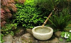 arbustes jardin japonais; jardin zen