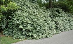 arbustes terrain argileux