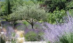 arbustes terrain sec