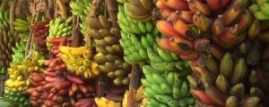 Régimes de Bananes de couleur