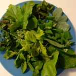 Salade avec des feuilles de Mertensia