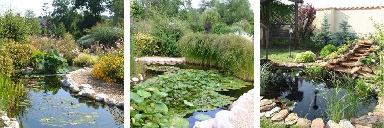 Quelles plantes dans un jardin aquatique