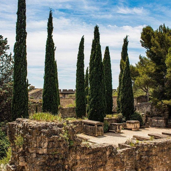 cyprès provence italie florence histoire