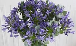 fleurs des jardins pour bouquets
