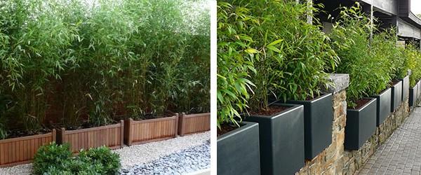 bambou vente en ligne de bambous bambou pas cher leaderplant. Black Bedroom Furniture Sets. Home Design Ideas