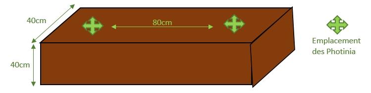 Schéma de plantation pour une haie de photinia