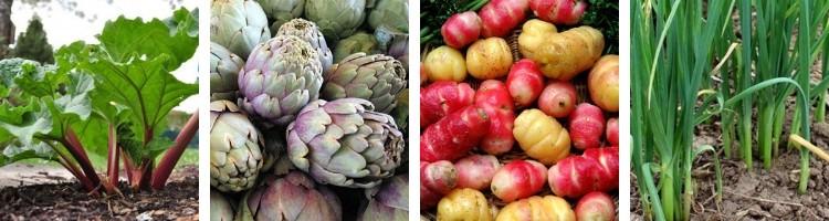 Légumes perpétuels Potagers