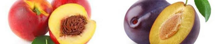 Nectariniers / Pruniers