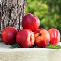 Nectarinier nain Necta Me - Fruit Me ®