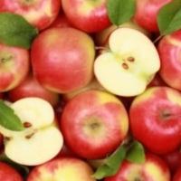Pommier nain Apple Me Gala - Fruit Me ®