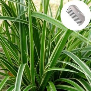 Quand et comment tailler les gramin es conseils tailler les plantes leaderplant - Quand et comment tailler les framboisiers ...