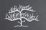 Taille du Kiwi
