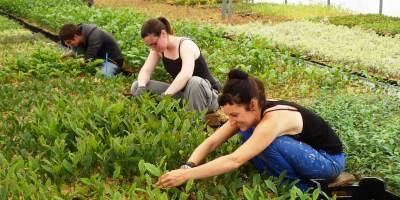 Jeunes plants de pépinière pour jardin, balcon, terrasse