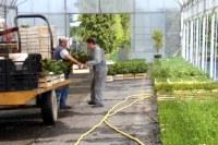 preparation de commande de jeunes plants
