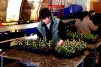 rempotage des jeunes plants
